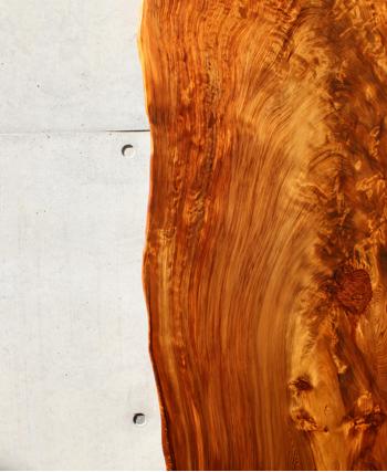 美しい世界を無限に描く屋久杉